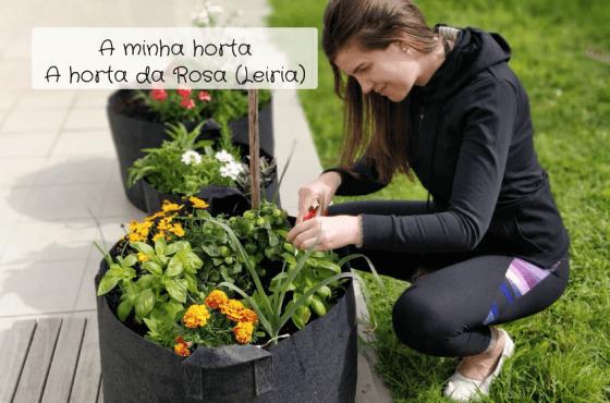 A minha horta – A horta da Rosa (Leiria)