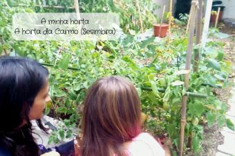 A minha horta – A horta da Carmo (Sesimbra)
