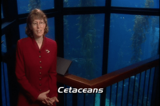 """""""The Language of Whales"""" featurette"""