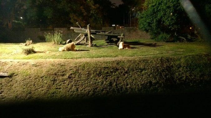 culturageekradio.com en el zoo con el Nokia Lumia 1020
