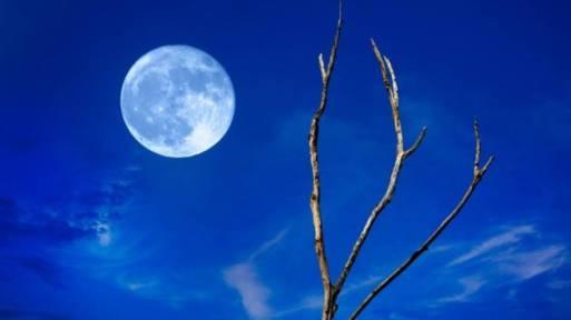 blue moon galeria www.culturageek.com.ar