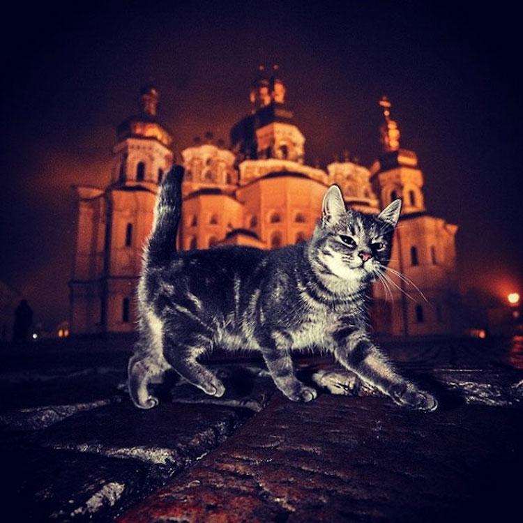SergeyPolyushko animals 14
