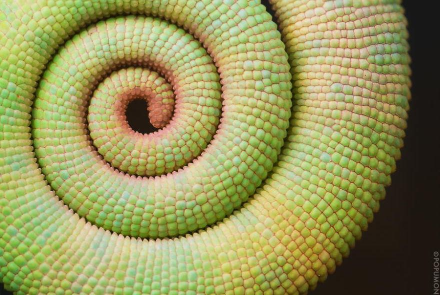 Geometrical Plants plantas geometricas Cultura Inquieta14