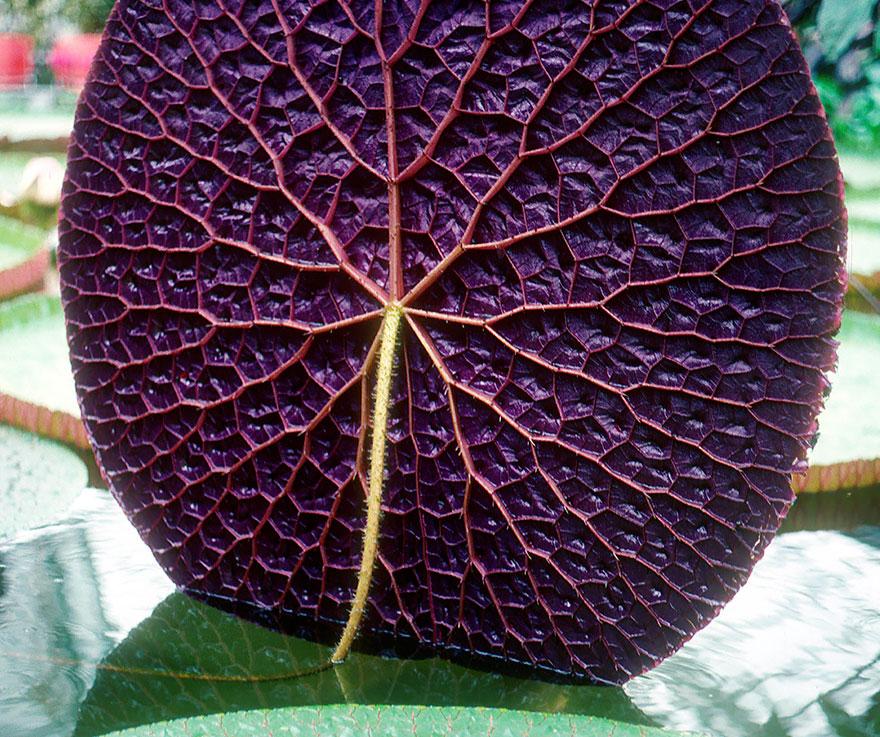 Geometrical Plants plantas geometricas Cultura Inquieta3