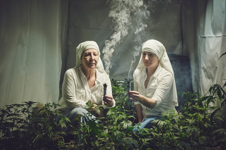 Sisters of the Valley Hermanas del Valle marihuana weed 2