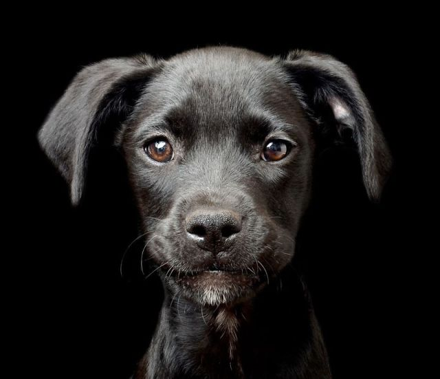 dog photographer culturainquieta4