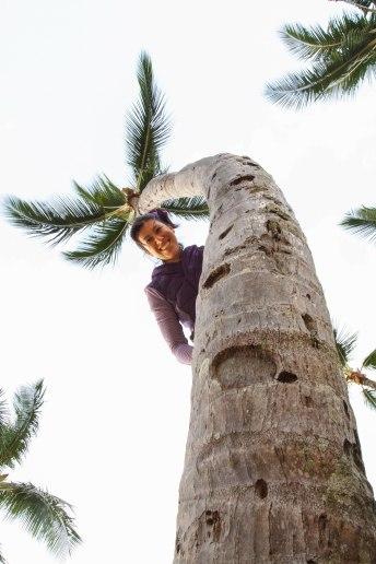 Climbing Coconut Trees in Lihue, Kaua'i