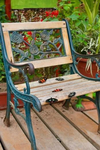 La Mariposaria - butterfly sanctuary