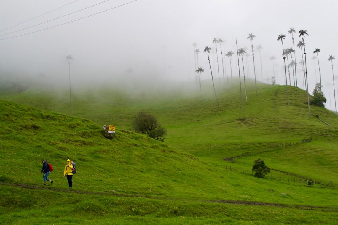 Valle De Cocora, Salento, Colombia