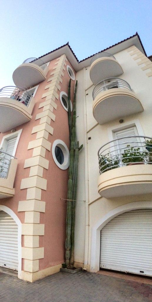 Tall Cactus - Nafplio, Greece