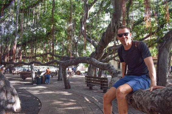 Lahaina Banyan Tree4