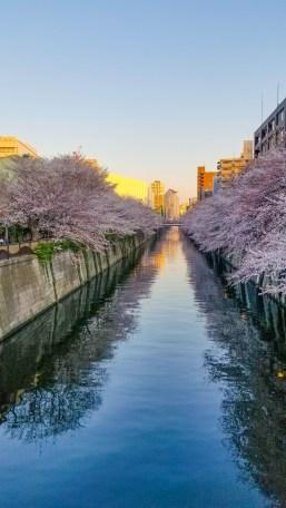Nakameguro Cherry Blossom River