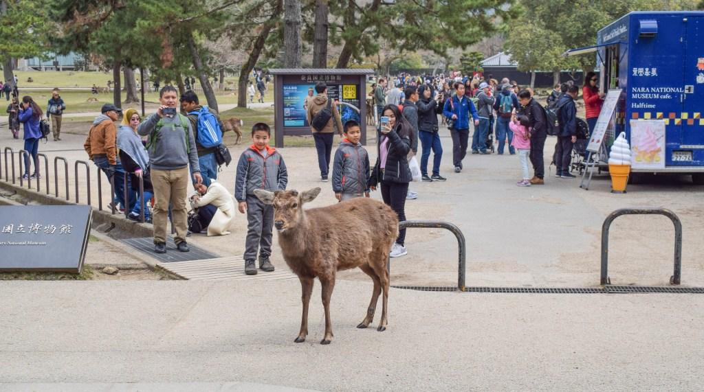 Nara Deer Crossing