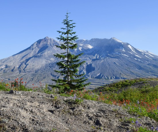 Harry's Ridge Trail, Mount Saint Helens, Washington