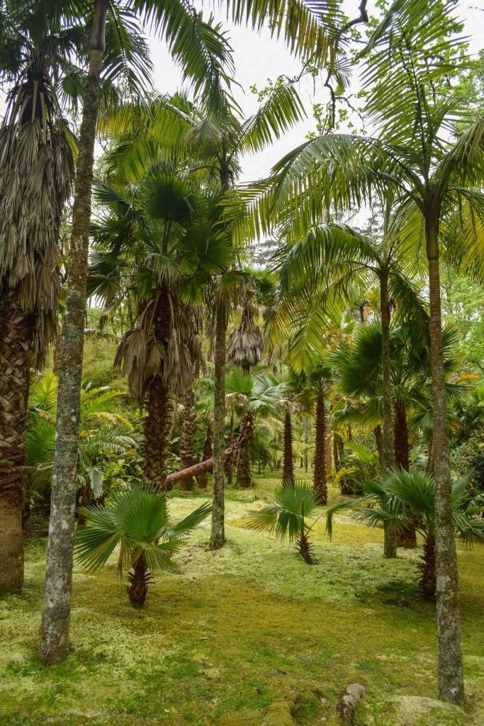 Terra Nostra Garden, Sao Miguel Island, Azores