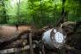 El Bosque de Hambach