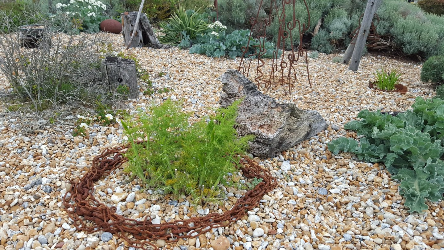Fennel and chain, Propect Cottage