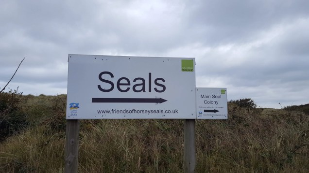 seals-this-way