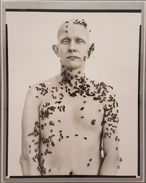 Ronald Fischer, beekeeper, 1981. Fra utstillingen Avedons Amerika, Henie Onstad kunstsenter. Alle fotografier Richard Avedon. Foto fra utstillingen; Siri Wolland.