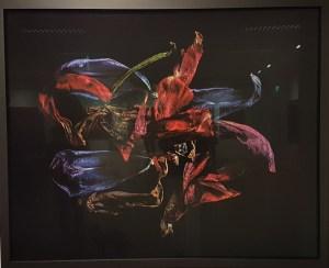 Fotograf Johs. Bøe, Den reisende. Foto fra utstillingen, Siri Wolland.