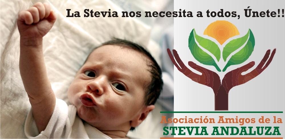 Colabora con la Asociación de Amigos de la Stevia Andaluza