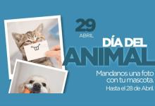 Photo of DÍA DEL ANIMAL