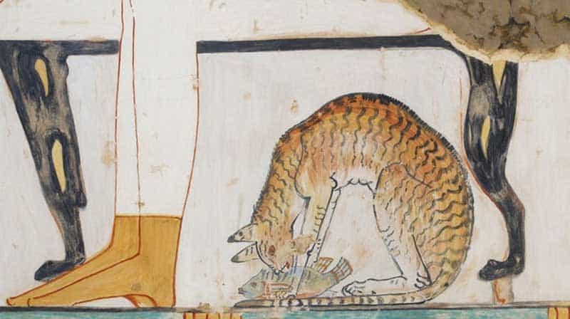 chat-domestique-egypte