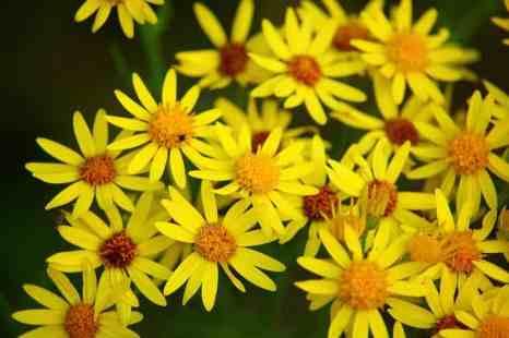 flower-1514060_960_720