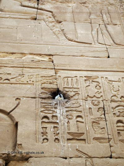 Bird nesting, Temple of Horus, Edfu