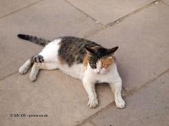 Cat, Karnak Temple, Luxor