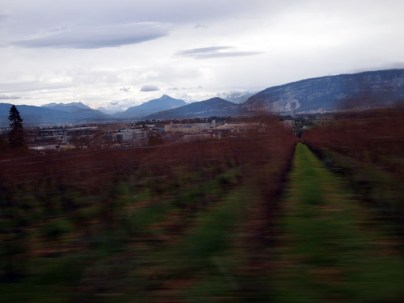 Vineyard, Geneva
