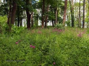 Wild flowers at Riverord Organics