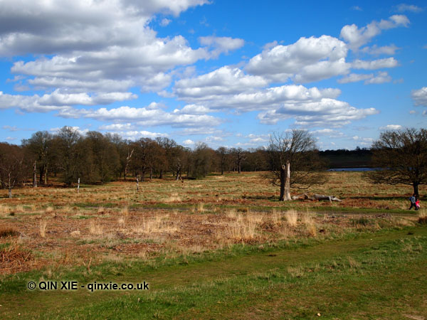 Grassland, Richmond Park