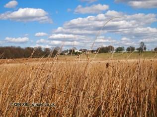 Long grass, Richmond Park