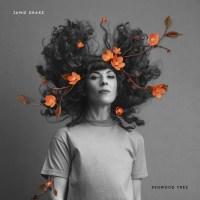 Jamie Drake shares 'Redwood Tree' video