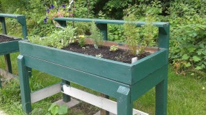 One of the original universal access table beds, with a fresh coat of paint and some communal herbs. Each gardener is assigned a section of in-ground garden or 1-2 table beds. A couple of beds though, are reserved for communal plants, like herbs and flowers.