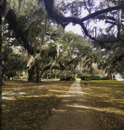 city park oak trees