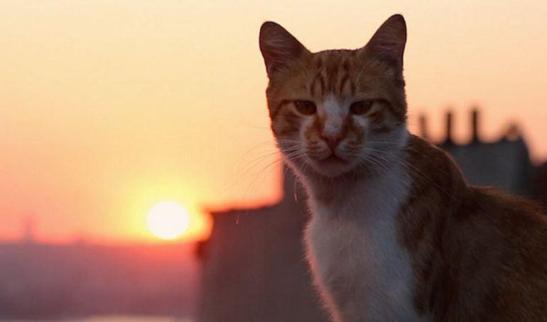 Kedi movie