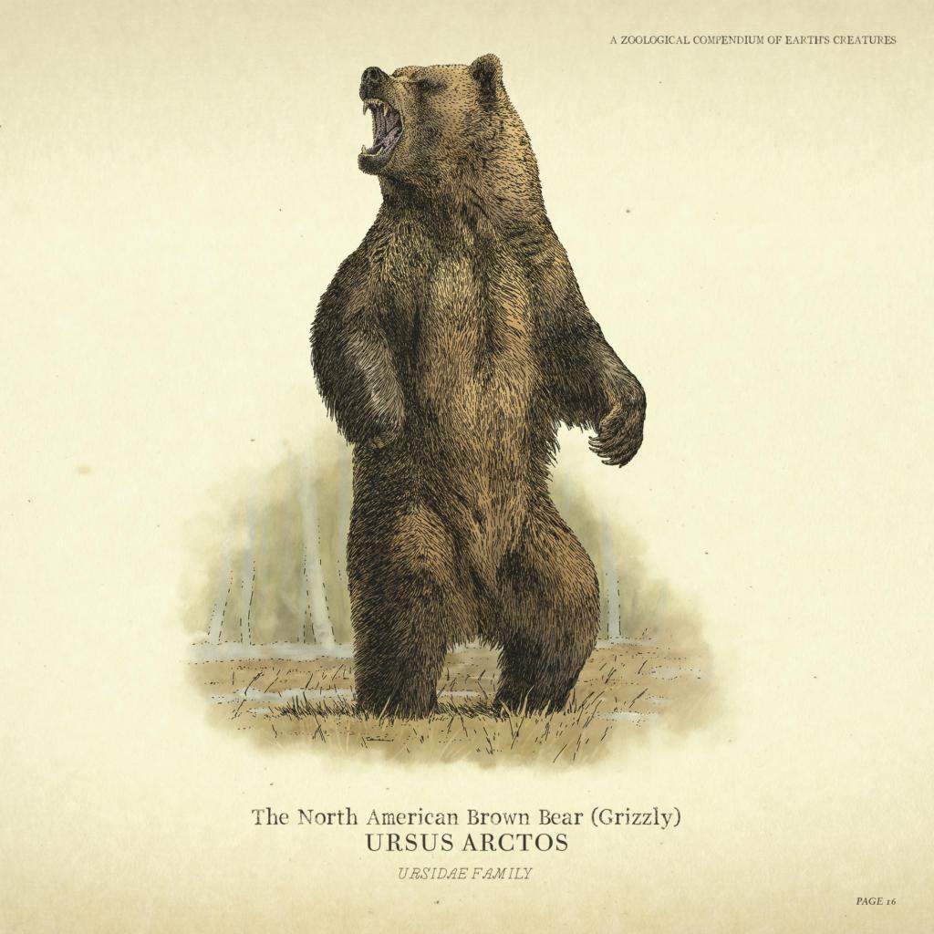 Red Dead Redemption 2 -Wildlife - BEAR