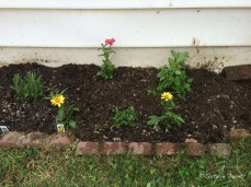 Plant bed right