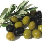 el-arbol-del-olivo-aceitunas-600x402