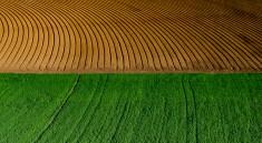 Dany Sternfeld | Irrigated Field