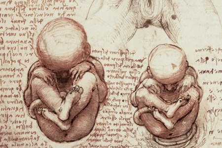 Leonardo da Vinci Fetus Illustration