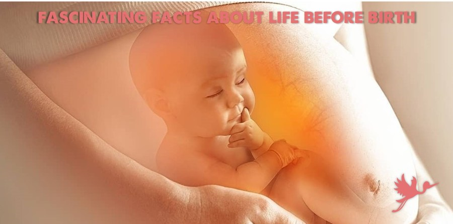 12 Fascinating Facts About Life Before Birth