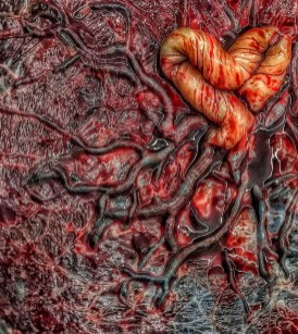 Placenta Heart Cord