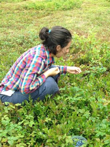 Al picking berries.jpg