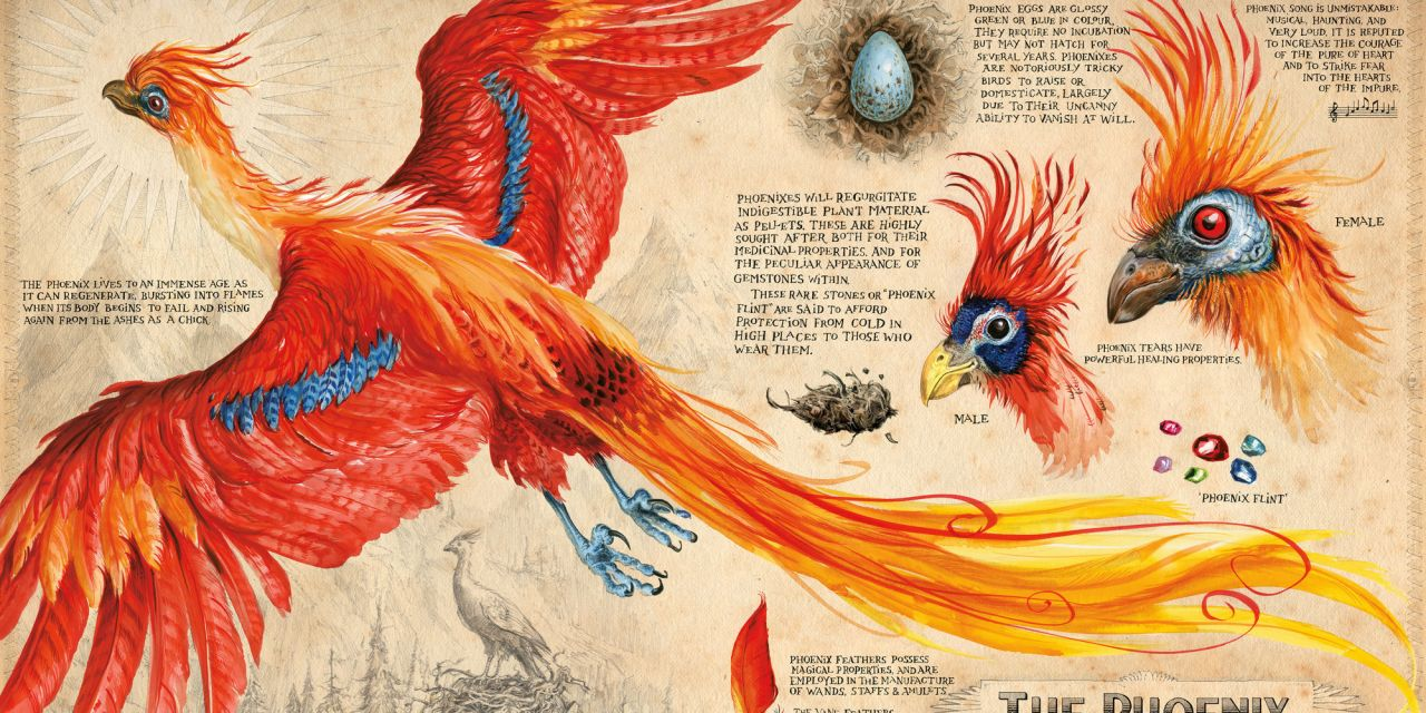 Exhibition Exceeds Expectations: The British Library's Harry Potter: A History of Magic