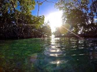 Mangrove we swam through at Cayo Caracoles