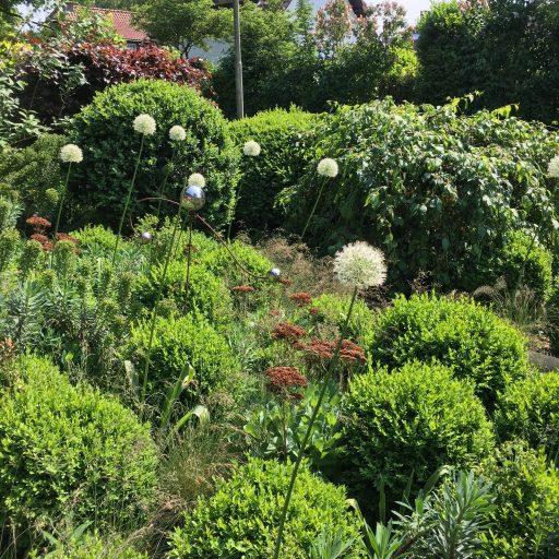 0ur garden