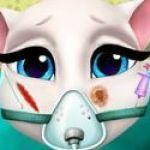 Phẫu thuật cho mèo Angela